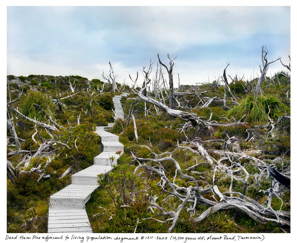 Rachel Sussman, The oldest living things in the world, 2004-ongoing