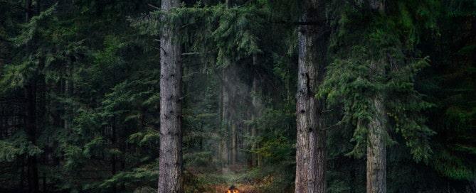 "Ellie Davies, ""Between the trees. Fires 9, 2018"" Cortesía de la artista"
